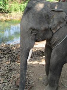 elephant 054