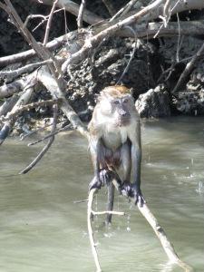 mangrove3101 052