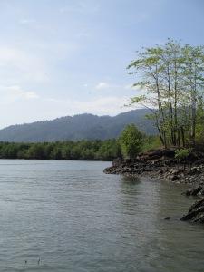 mangrove3101 053