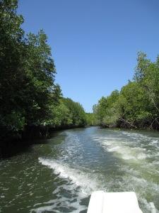 mangrove3101 073
