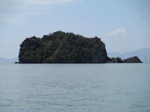 mangrove3101 099