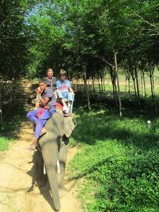 elephant 024
