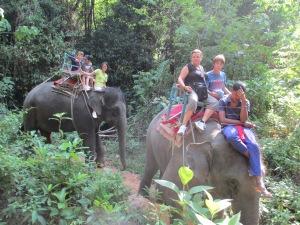 elephant 028