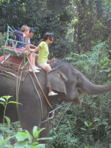 elephant 029