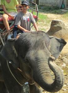 elephant 042