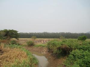 changmai1 017