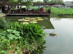 Chiangmai3 134